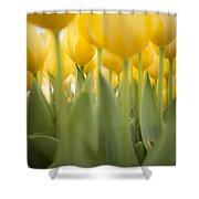 Under Yellow Tulips Shower Curtain