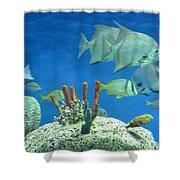 Underwater Beauty Shower Curtain