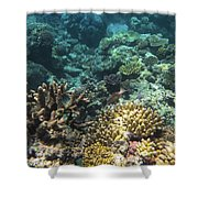 Underwater Color Shower Curtain