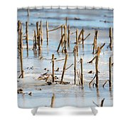 Underwater Cornfield Shower Curtain