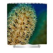 Underwater Gorgonian Shower Curtain