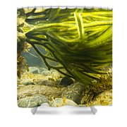 Underwater Shot Of Green Seaweed Attached To Rock Shower Curtain