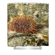 Underwater Shot Of Sea Urchin On Submerged Rocks Shower Curtain