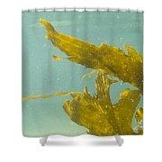 Underwater Shot Of Seaweed Plant Floating Leaves Shower Curtain