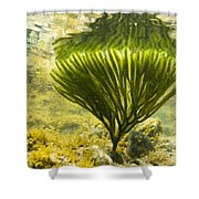 Underwater Shot Of Seaweed Plant Surface Reflected Shower Curtain