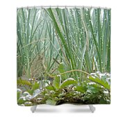 Underwater Shot Of Submerged Grass And Plants Shower Curtain