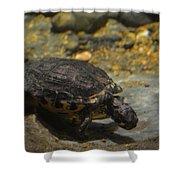Underwater Turtle Shower Curtain