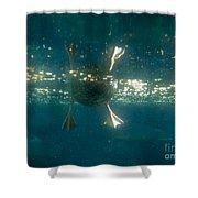 Underwater View Of Duck's Webbed Feet Shower Curtain