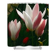 Unfolding Tulips Shower Curtain