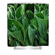 Unfurling Of The Hosta Shower Curtain