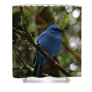 Unicolored Jay Shower Curtain