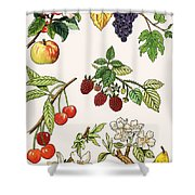 Unidentified Montage Of Fruit Shower Curtain