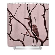 Unknown Bird Shower Curtain