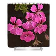 Pink Geranium Flower Shower Curtain