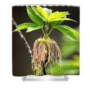 Unknown Tree Flower Shower Curtain