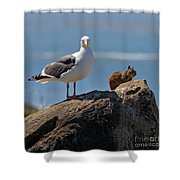 Unlikely Friends By Diana Sainz Shower Curtain by Diana Sainz