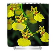 unnamed hybrid Orchid  Shower Curtain