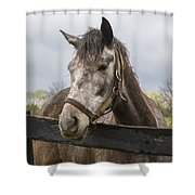 Unrivaled Honor Shower Curtain