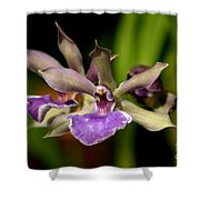 Unusual Orchid Shower Curtain