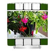 Unusual Simultaneous Bloomers 5 Shower Curtain