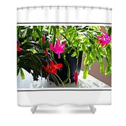 Unusual Simultaneous Bloomers 6 Shower Curtain