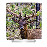 Up Close And Personal With An Elk Shower Curtain