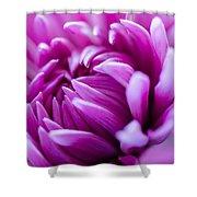 Up-close Flower Power Pink Mum  Shower Curtain