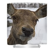 Up Close... Shower Curtain