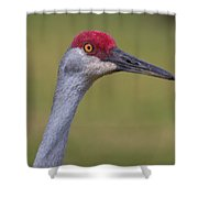 Up Close With A Sandhill Crane Shower Curtain