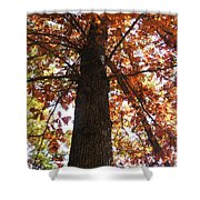 Up Fall Shower Curtain