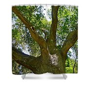 Up In The Trees Shower Curtain