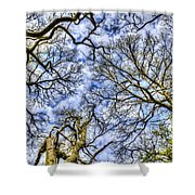 Up Into The Trees Shower Curtain
