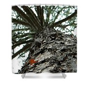 Up Pine Shower Curtain