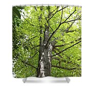 Up The Oak Tree Shower Curtain
