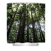 Up Through The Trees Shower Curtain
