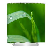 Up To The Sun - Featured 3 Shower Curtain