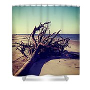 Uprooted Tree On The Beach Shower Curtain