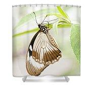 Upside Down Shower Curtain by Anne Gilbert