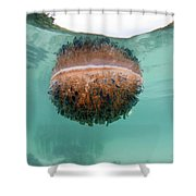 Upside-down Jellyfish Cassiopea Shower Curtain