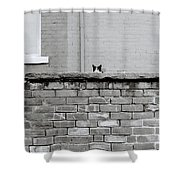 Curiosity Of The Cat Shower Curtain