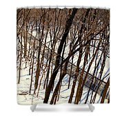 Urban Forest At Dusk Shower Curtain