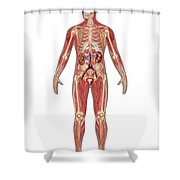 Urinary, Skeletal & Muscular Systems Shower Curtain