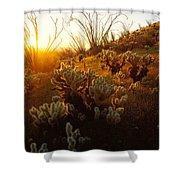 Usa, Arizona, Sonoran Desert, Ocotillo Shower Curtain