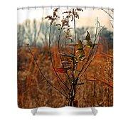 Autumn Grass6277 Shower Curtain
