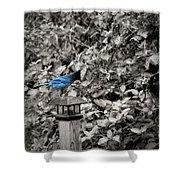 Vagabon Blue Bird Shower Curtain