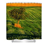 Val D'orcia Tree Shower Curtain