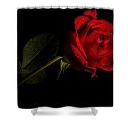 Valentine's Day Velvet Rose Shower Curtain