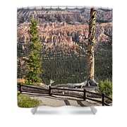 Valley Light Shower Curtain