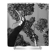 Valley Of The Giant Tingles Bw Shower Curtain