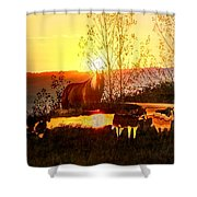 Valley View Horses Shower Curtain
